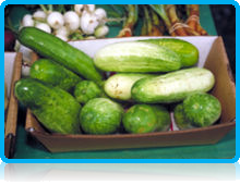 """In many languages, the silly season is called """"cucumber time"""" or similar."""